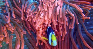 Rudé moře Egypt
